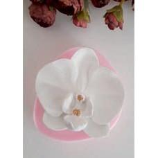 HD0669- Tekli Orkide